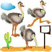 Illustration ostrich runs covers head sand and cost(stand)s on background cloud and cactus poster