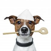 Chef Dog With wooden and big Cooking  Spoon poster