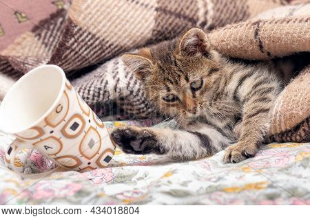 A Small Kitten In Bed Under A Blanket Threw A Mug