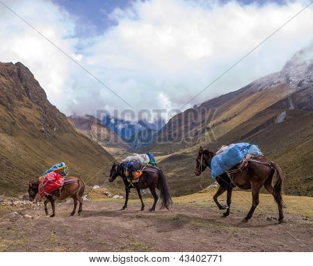 Horses On Salcantay Trail In Peru At The Col