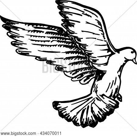 Sketch Of Pigeon Bird Flying. Black And White Image. Vector Sketch Of A Flying Bird. Hand Drawn Illu