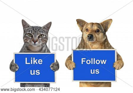 A Beige Dog And Gray Cat Are Holding Blue Signs T Says Like Us And Follow Us. White Background. Isol