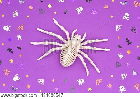 Happy Halloween Concert. Toy Skeleton Of A Spider Tarantula On A Purple Background Inside A Frame Ma