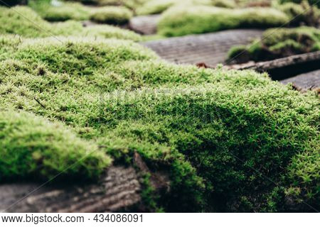 Tiled Roof Covered With Moss. The Stone Is Covered With Beautiful Moss And Lichen. Bright Green Moss
