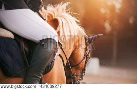 A Rider Sits On A Beautiful Sorrel Horse With A Light Mane In The Saddle, Holding It By The Bridle R
