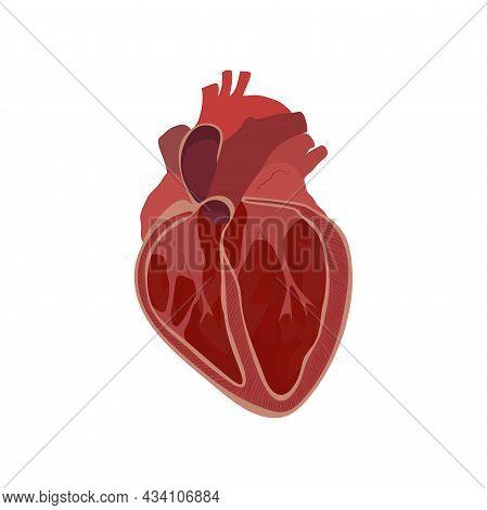 Internal Inside Structure Of The Heart. Pulmonary Valve Opened. Vector Flat Anatomy Medical Illustra