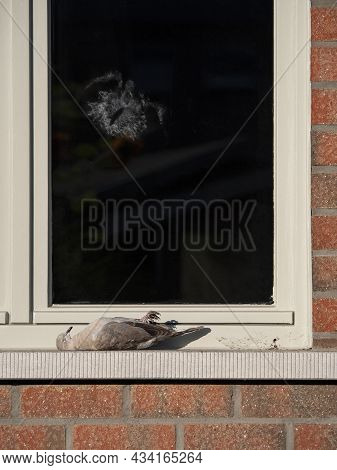 Silhouette And Print Of A Bird That Crashed Into A Window With The Dead Pigeon As Victim On The Wind