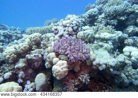 Colorful, Picturesque Coral Reef At The Bottom Of Tropical Sea, Different Types Of Hard Coral And Vi