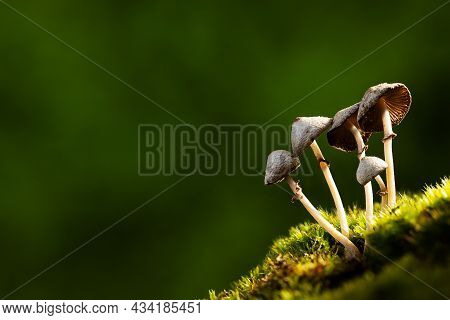 Forest Mushrooms On Blurred Green Nature Background