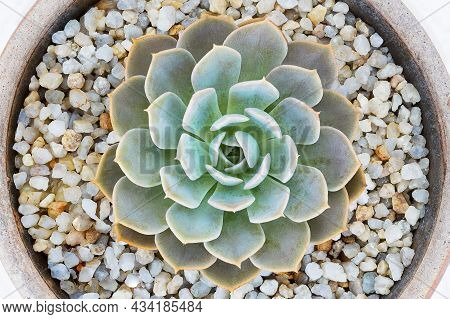 Succulent Plant In The Clay Flower Pot On White Background,top View