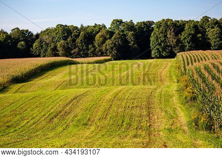 Farm Strip Cropping In Wisconsin With Corn And Hay, Horizontal