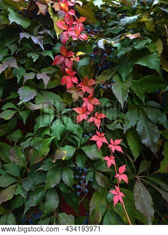 Beautiful Bright Autumn Pattern Of Living Leaves Of Different Colors