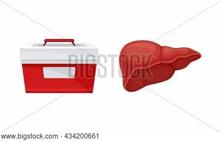 Liver Donor Organ And Cooler Box For Transporting Human Organs Cartoon Vector Illustration