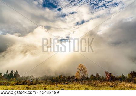 Majestic Alone Beech Tree On A Hill Slope With Sunny Beams At Mountain Valley