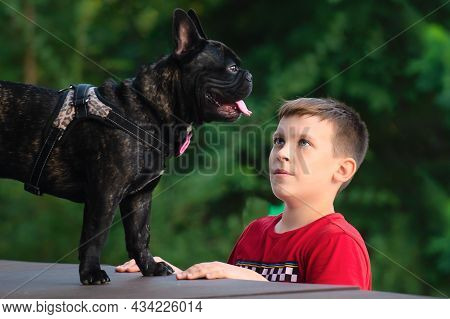 The Boy Looks At His Four-legged Friend, A French Bulldog Dog, With Loving Eyes.