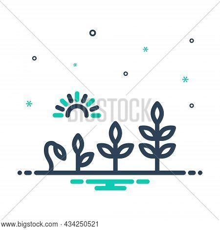 Mix Icon For Evolution Development Growth Rise Flourish Transformation Growth Sprout Garden