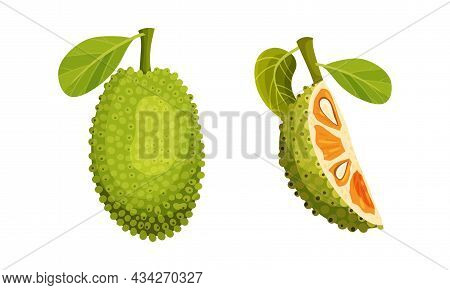 Jackfruit Tropical Fruit. Whole And Quarter Of Ripe Sweet Delicious Green Fruit With Seed Coat And F