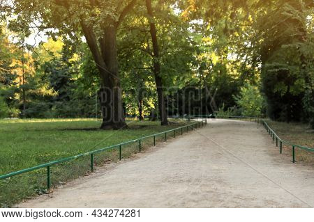Pathway In Park With Green Trees On Sunny Day