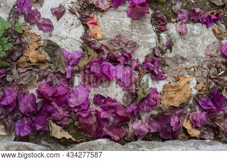 Purple Petals On Grey Cobblestone Pavement. Background And Wallpaper Picture. Autumn And Oldness Pic