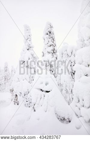Funny snow ghost tree in majestic winter forest in Lapland Finland