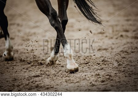 Equestrian Sport. Dust Under The Horse's Hooves. Legs Of A Galloping Horse. The Legs Of A Dressage H