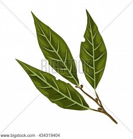 Stylized Illustration Of Bay Leaf. Image For Design Or Decoration.