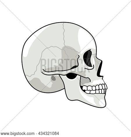 Skull Profile. Gray Skulls Picture On White Background, Halftone Anatomy Symbol, Illustrated Dead Hu