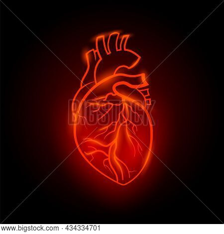 Red Neon Human Heart Illustration. Anatomical Human Heart With Red Line Neon Effect On Black Backgro