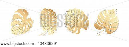 Set Of Golden Monstera Leaves. On White Background. Vector Illustration.