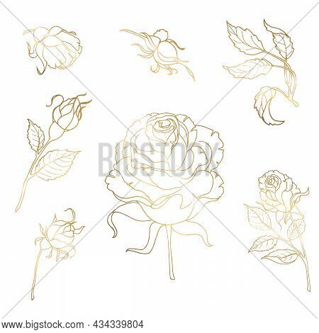 Rose Gold Flower Is Drawn By Hand With Thin Lines. A Set Of Buds And Branches, Leaves. Vector Illust
