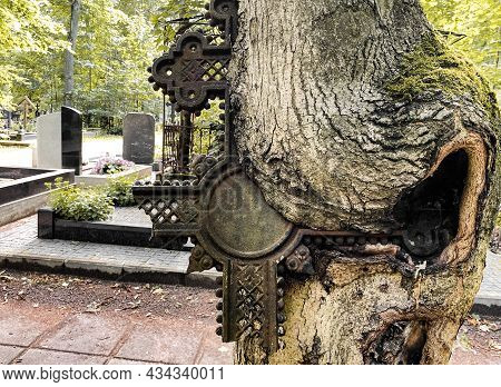 Old Cemetery. The Tree Swallowed Up Broken A Metal Grave Cross From Abandoned Burial Site. Life Wins
