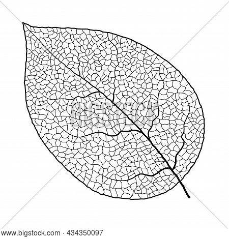 Leaf Vein Vector Texture Isolated Transparent Autumn Black Detail Botanical Vein Leaf Organic