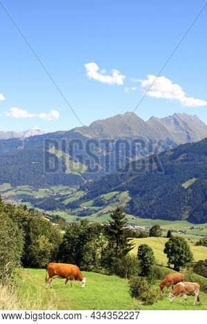 Three cows grazing in a mountain meadow in Alps mountains, Tirol, Austria. View of idyllic mountain scenery in Alps with green grass and red cows on sunny day. European mountain landscape
