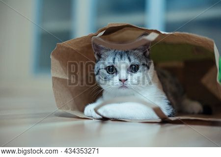 Funny Cat With Big Yellow Eyes Looks Out Of Curiosity From A Craft Paper Bag. Funny Pets Playing At