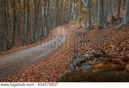 Dirt Road In The Autumn Yellow Forest.