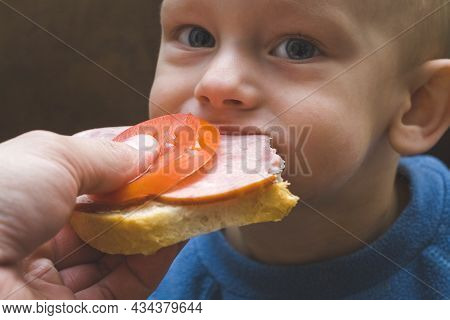 One Year Old Baby Boy Eat Sandwich With Ham And Tomato Feed By Hand Of Dad