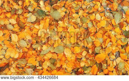 Colorful yellow and orange autumn leaves on dark asphalt background.
