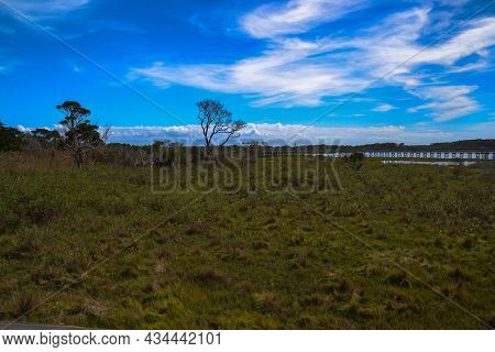 Two Trees Sway In The Breeze At The Life Of The Marsh Trail, An Elevated Wooden Boardwalk Looping Ar