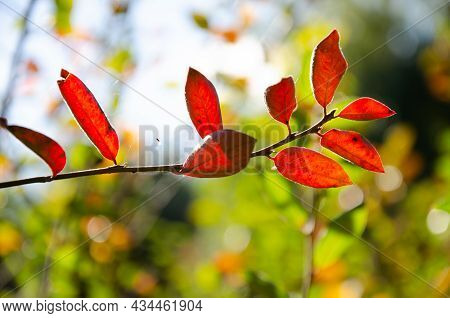 Red And Burgundy Leaves On Green, Orange, Blue Blurred Background With Bokeh. Autumn Concept. Autumn