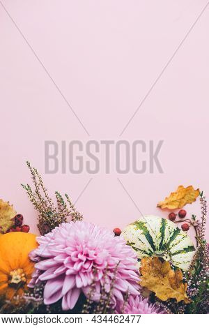 Stylish Pumpkins, Purple Dahlias Flowers, Leaves And Heather On Pink Background. Autumn Flat Lay. Mo