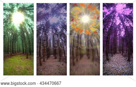 Vertical Banners Of Nature Misty Fall Landscape With Orange Falling Autumn Leaves. Panoramic Banners
