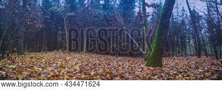 Wide Format Of Dramatic Scene Landscape In The Autumn Forest