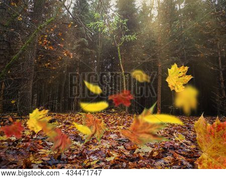 Fall Wind Blowing Yellow Leaves In Autumn Occulture Wild Woods
