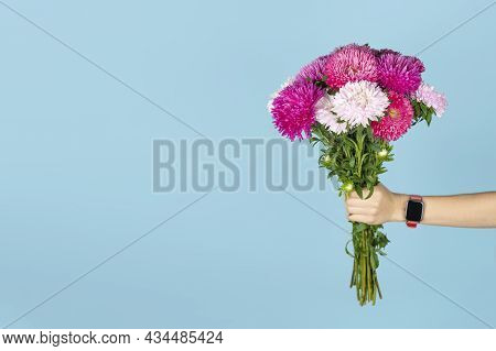 A Large Bouquet Of Beautiful Pink And White Asters In Hand Isolated On Blue Background. Autumn Flowe
