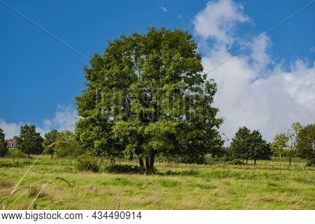 Highly Cultivated Agricultural Grassland With A Big Old Tree And A Farm In The Background