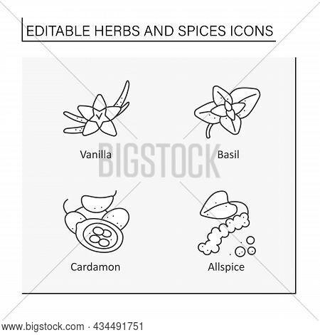 Herbs And Line Icons Set. Different Types Of Seasoning. Vanilla, Basil, Cardamon, .food Preparation