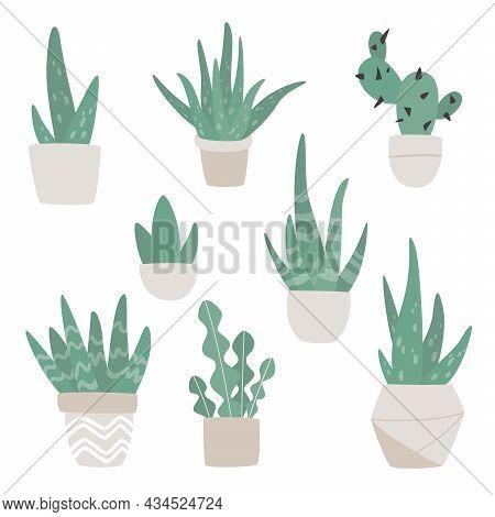 Hand Drawn Set Of Cute Aloe Vera, сactus And Succulent Plants Growing In Pots. Aloe In Pots. Housepl