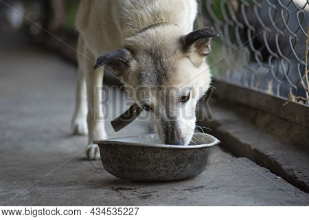 Hungry Dog Eating In The Old Tray. Hungry Homeless Dog Eating Food From Bowl In Dog Shelter And Need