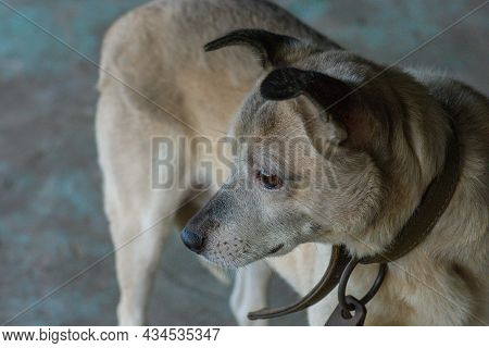 Homeless Dog In Dog Shelter. Dog In Adoption Centre With The Hope Of Finding A Home