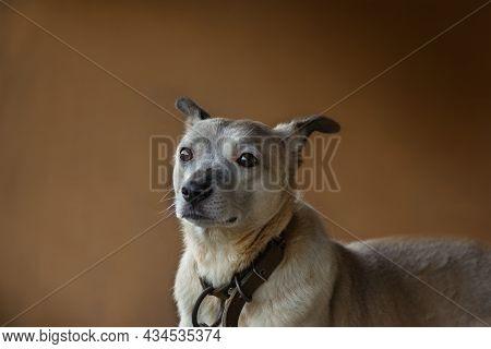 Dog Portrait On Coloured Background. Photograph Of Funny Yawning Dog. Dog Model Portrait In Studio